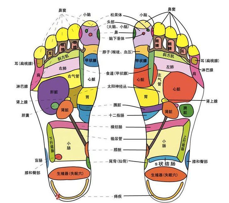 脚底按摩图反射区图片足疗按摩手法